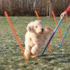 Trixie Dog Agility Slalom (Weave Poles)