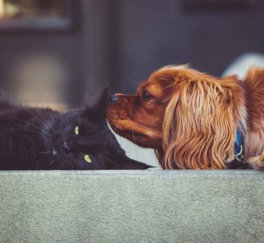 Puprise Post - Best Pets Blog India - Cats and Dogs How different they are in Behavior